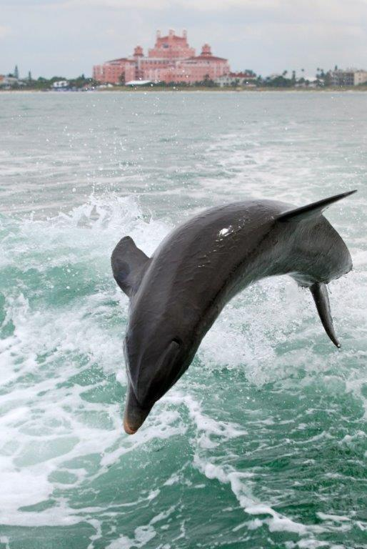 Dolphin in Bay
