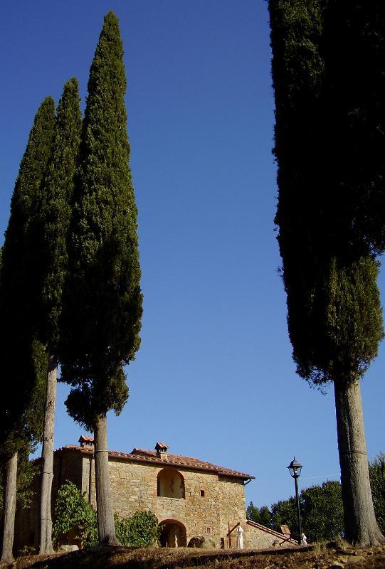 The cipressi in the garden
