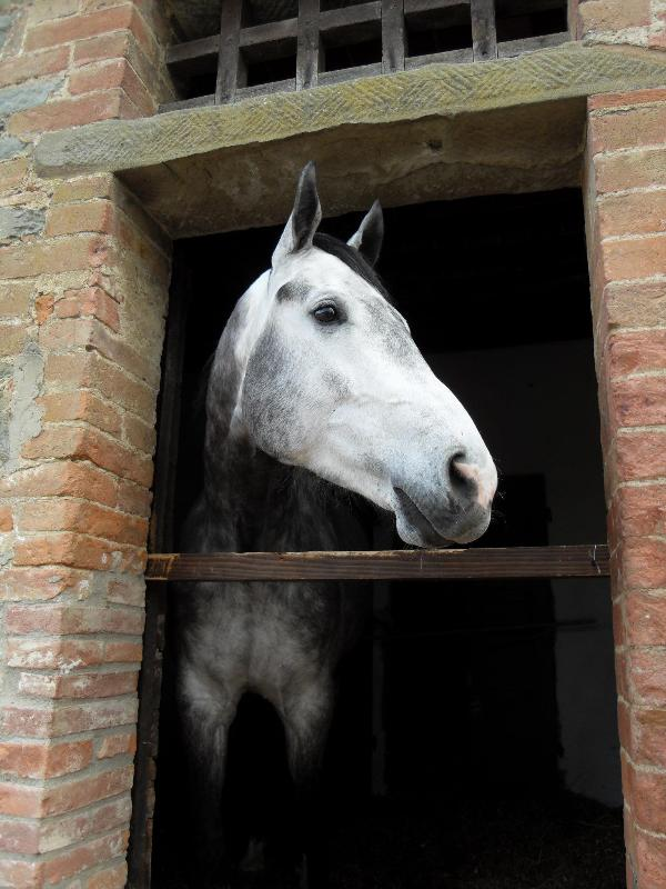 The Podere Pievina horses