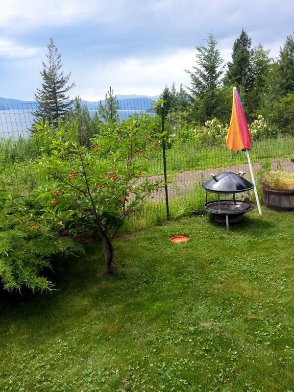 Guest yard and barbeque and umbrella