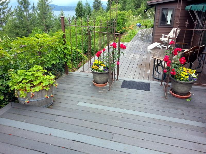 View from guest house deck flower area