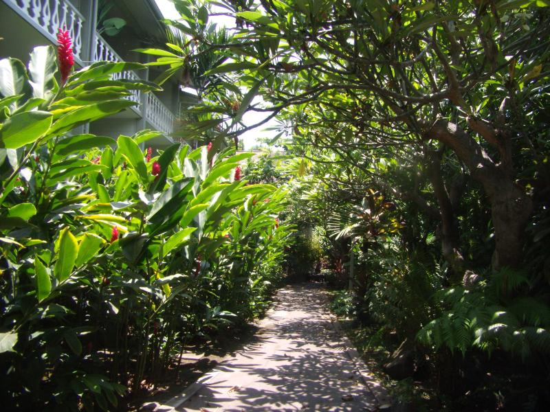 Tropical Flowers and Trees line Walk-way