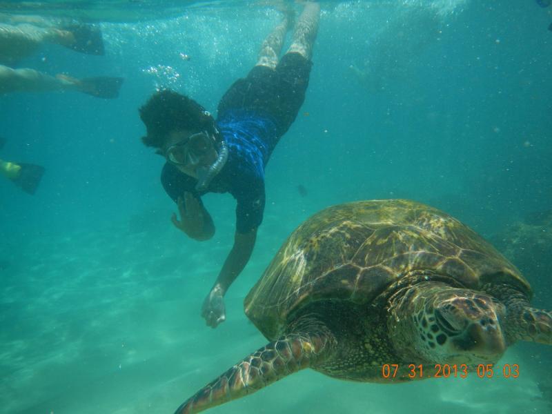 Sea turtle front of our condo