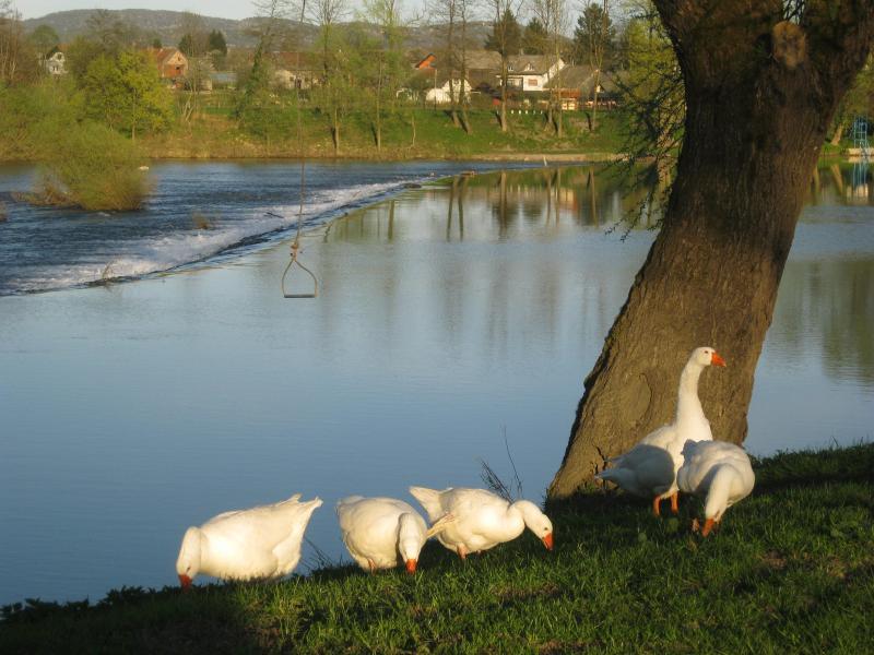 TOURISTIC ECO FARM FORTUNOVI - KOLPA RIVER, casa vacanza a Metlika