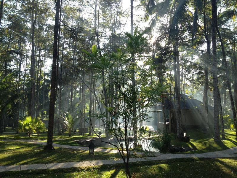 Les matinées ici sont sublimes - avec banquises à travers les arbres.