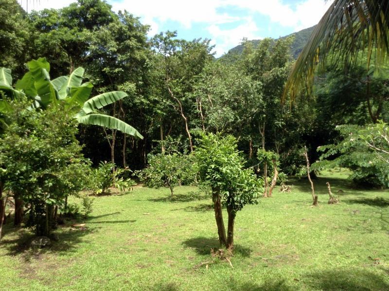 Der leicht abfallenden Wiese voller Früchte tragende Bäume