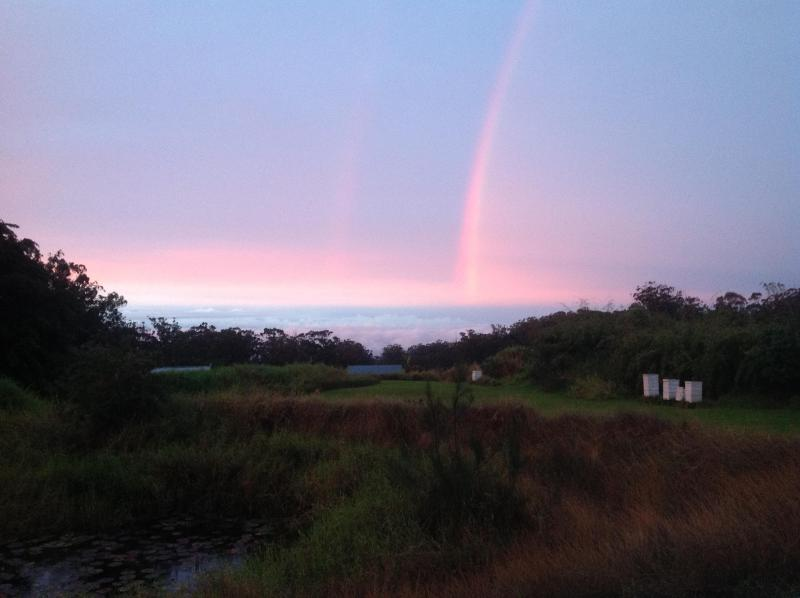 View of rainbow at sunset from back deck