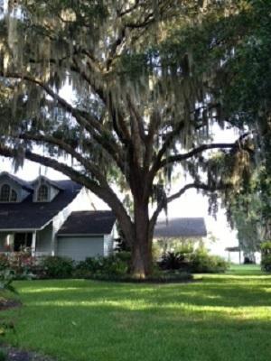 Bild von der Rückseite des Hauses