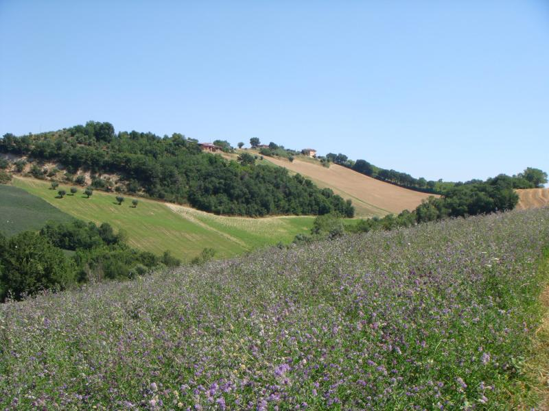 Views across the meadow from Rondine balcony