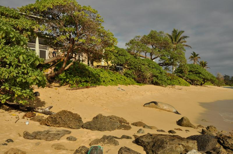Visitante asiduo de Laie Beach - Bessie Kuuipo