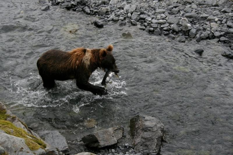 Bear feet from the house fishing