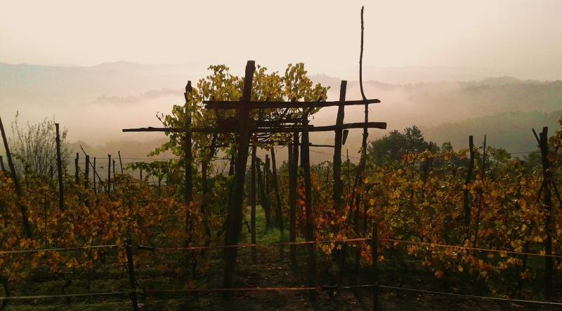 The neighboor's vineyard
