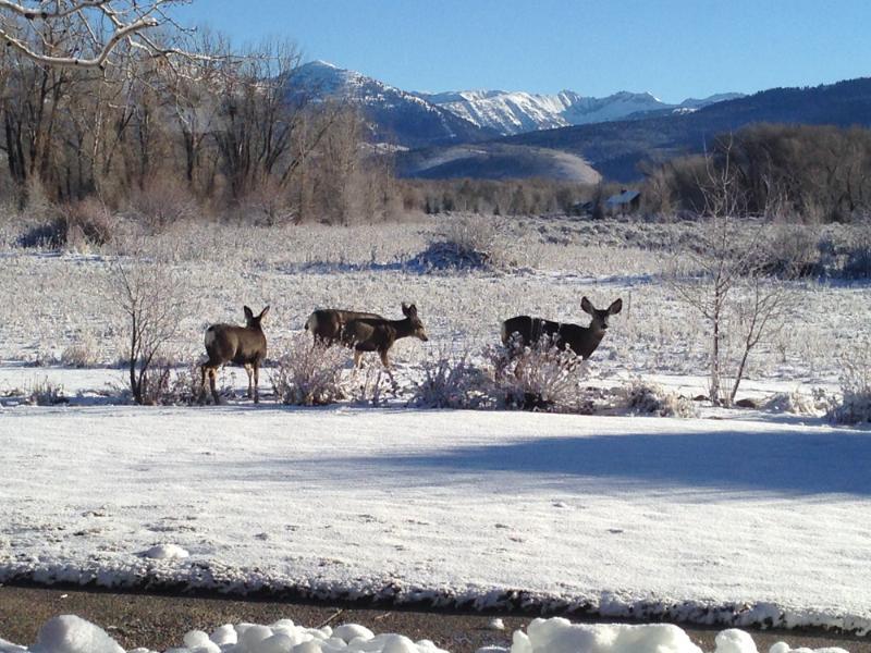 deer tv-backyard visitors