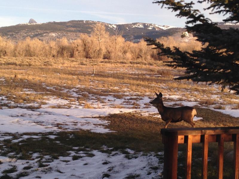 deer tv and the Grand Teton