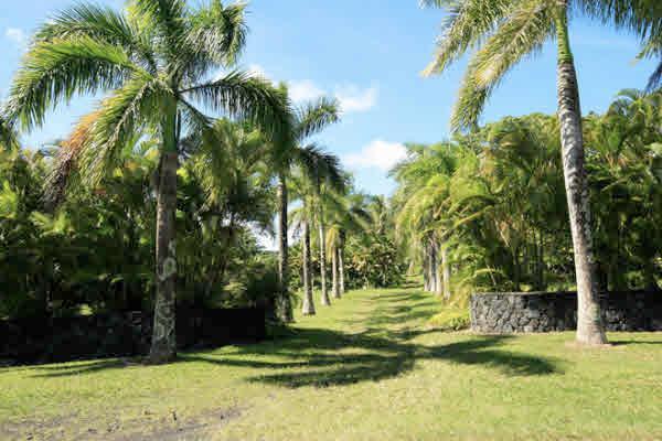 Royal Palm Driveway