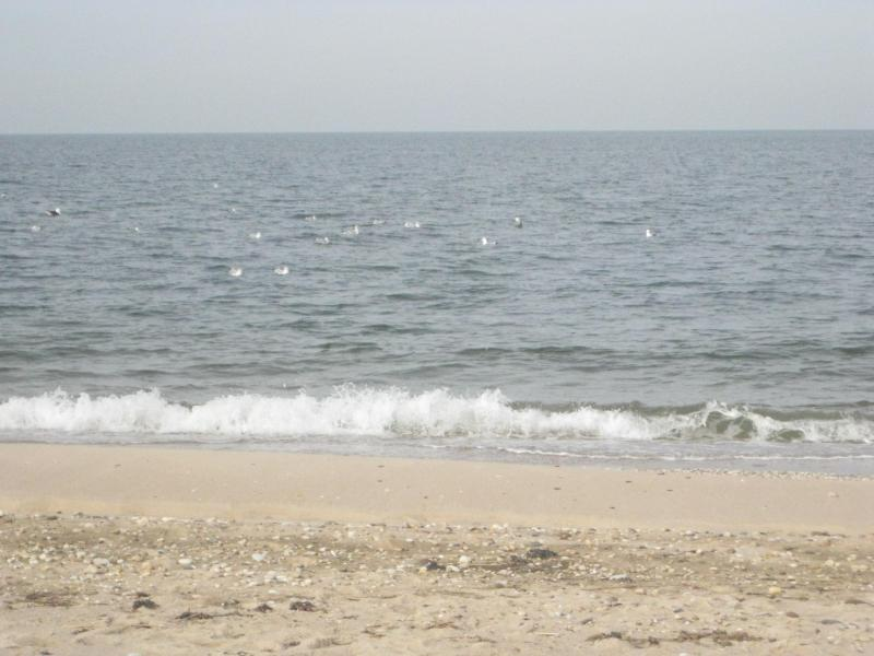 PRISTINE GETAWAY, WITHIN SHORT WALK OF TWO WHITE, SANDY, SOUND BEACHES, vacation rental in Southold