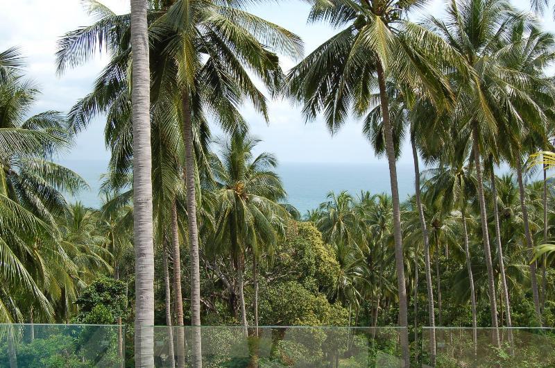 jungle and sea views