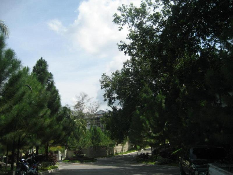 Pine trees and landscaping around the premises