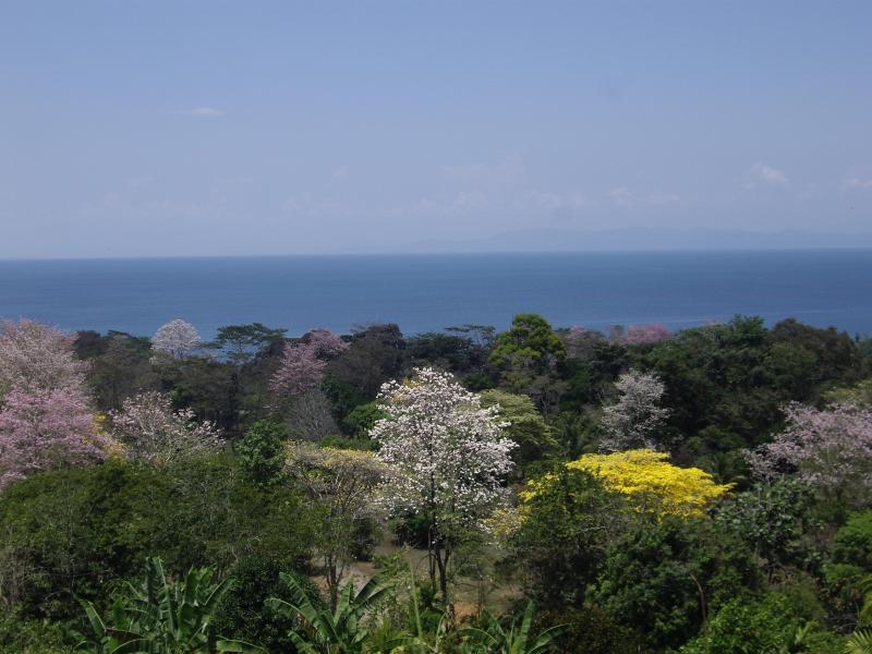 View from hillside across Golfo Dulce
