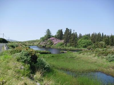 Ballynahinch River, Rhodedendrons in bloom