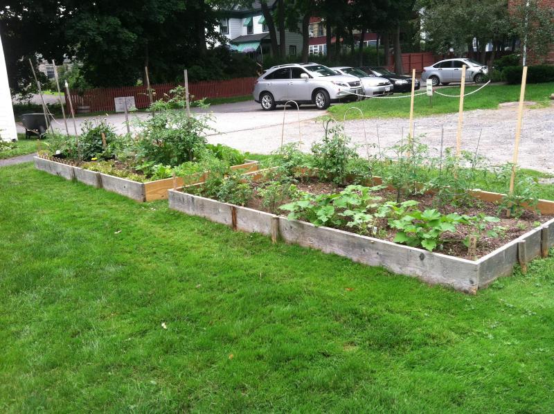 Orgainic Vegetable Garden