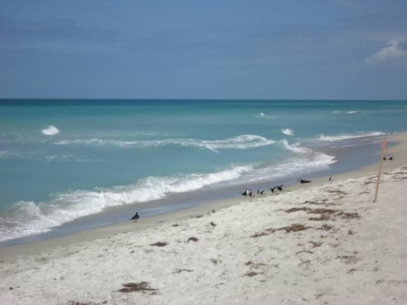 Las Hermanas/Starfish #2 Beachfront Longboat Key, holiday rental in Longboat Key