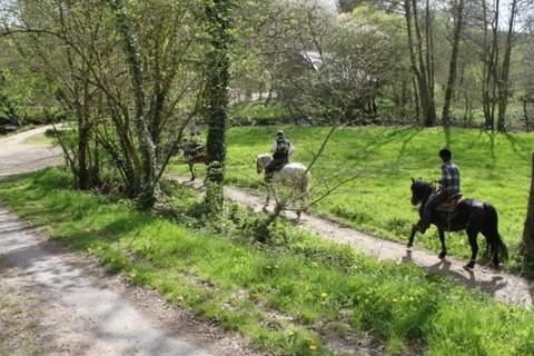 Pony trekking is available in the forest