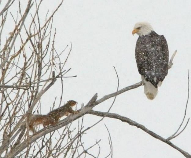 Nesting eagles across the cove are frequently spotted from the deck and living room.