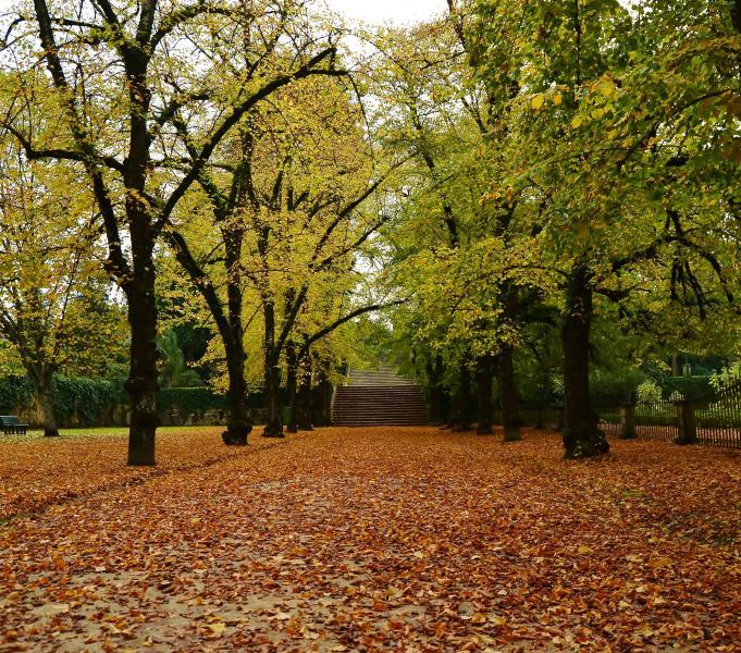 Jardim Botãnico (outono)