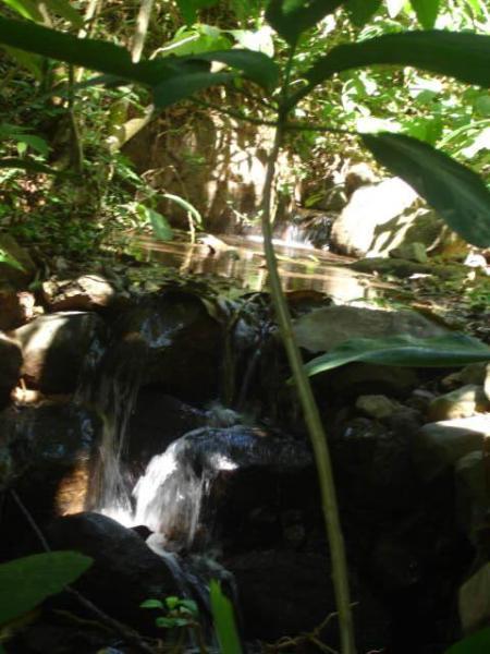Os sons de acalmar o pequeno riacho sazonal do viajante
