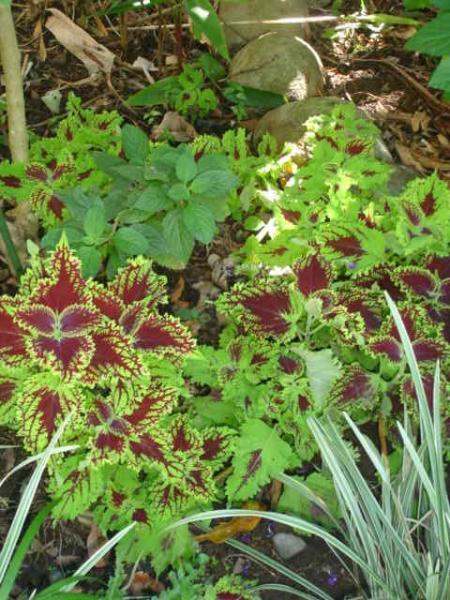 Beleza natural colorida colorida está em toda parte nos jardins