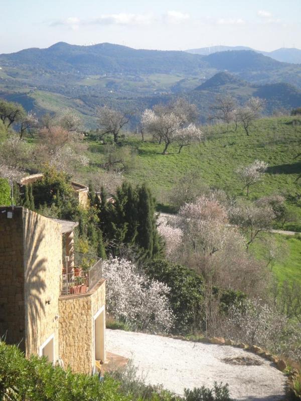 Almond trees in blossom in February