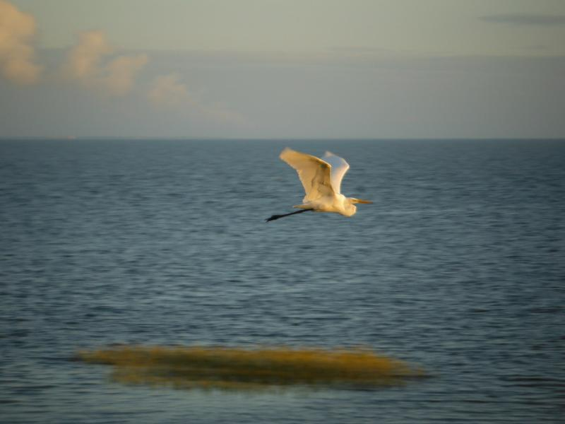 Photo taken from our balcony, birds love this part of the island