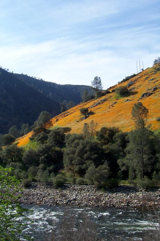 Poppies in Merced River Gorge into Yosemite Valley begins 27 miles from the ranch