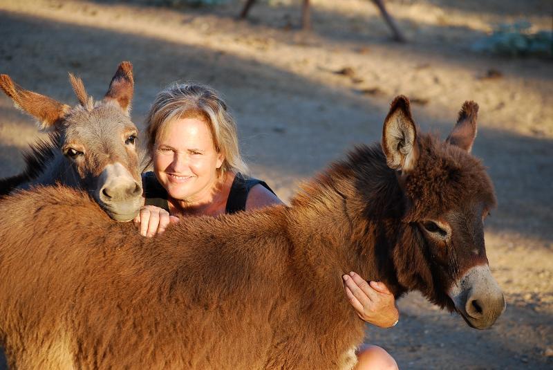 Mini Donkeys w/ Gayle