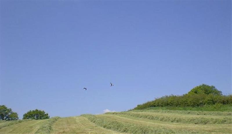 Red Kite over the farmland