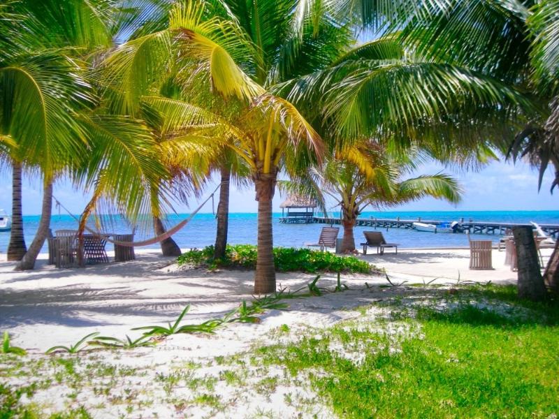 Les herbes indigènes sont protégées et illégales à enlever. Ils sont essentiels à l'écologie de l'île!