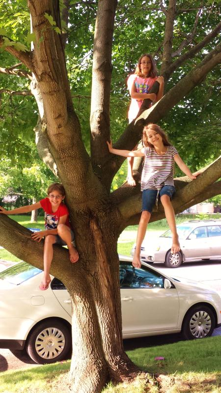 Tree climbing in front of the house