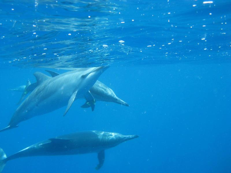 Our wild dolphins are a joy.
