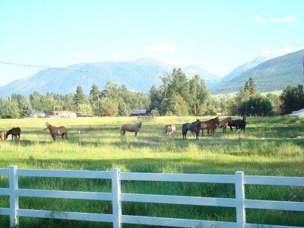plenty of horses and cattle who like to people watch, horse boarding and dog kennel available