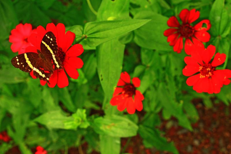Garden flowers and buterfly