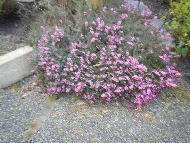 Heather 1st day of Spring