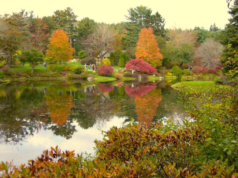 Asticou Gardens near house, at peak color in mmid Fall