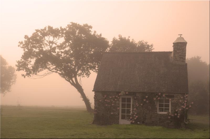 Wisteria in the mist