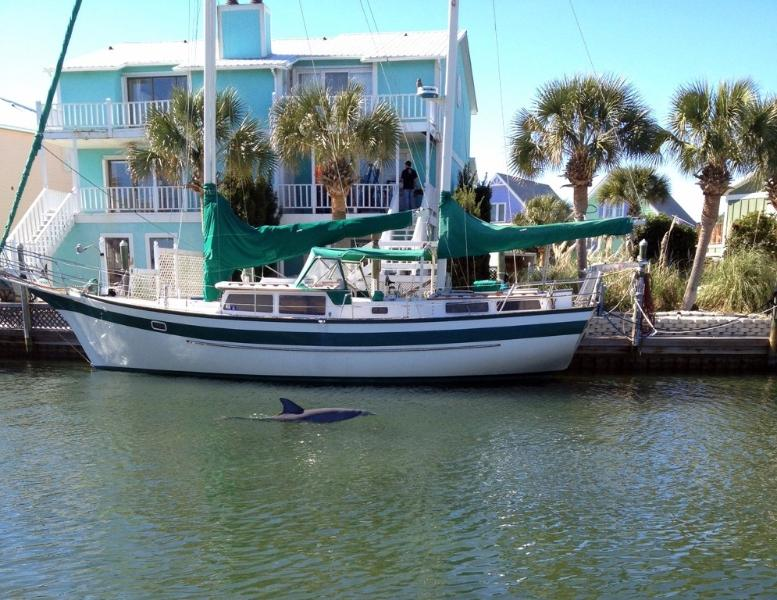 Delfín en canal