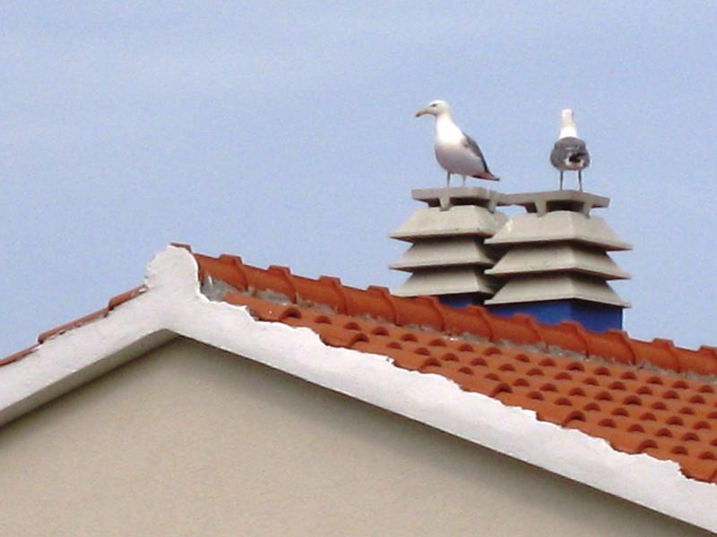 our neighbours