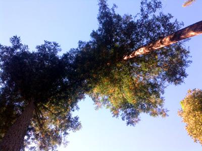 Big Bertha's, Redwood trees, Wine Country Rental