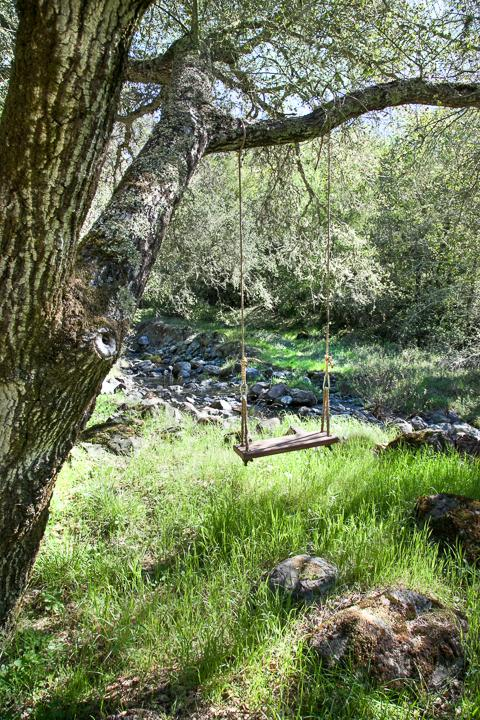 Tree swing overlooking the creek.
