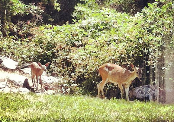 You won't see neighbors at the Creek House, but you still might meet some new friends.