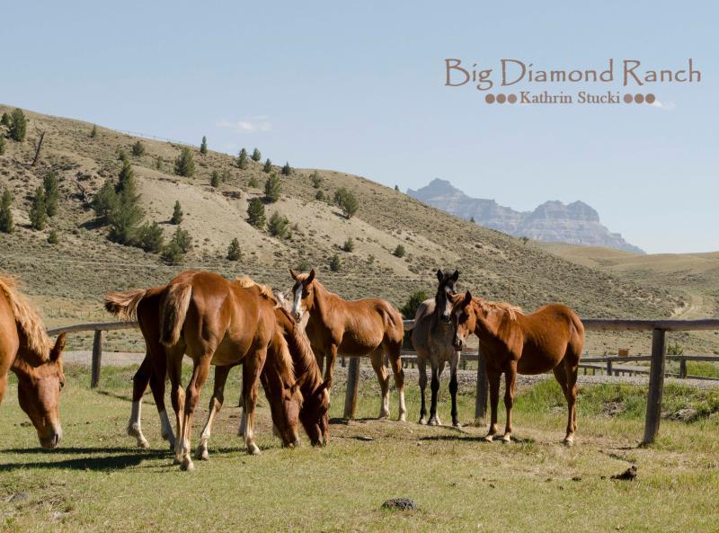 Zomer bezoekers op de Big Diamond Ranch